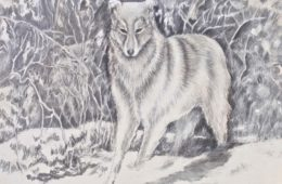 'Dos Lobos'